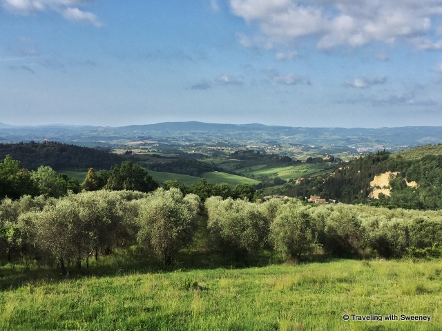 View from La Novellina of olive groves, rolling hills and the Val di Pesa