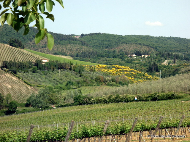Vineyards and olive groves in the Chianti hills of Tuscany