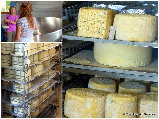 Touring the cheese factory with Arianna; Antonia's luscious cheese creations on racks in the factory