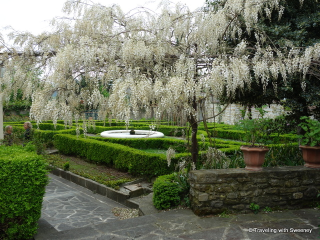 Gorgeous wisteria draping over the gardens of Villa La Collina